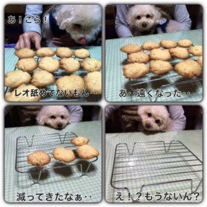 クッキーを焼いた日('15・3・1)