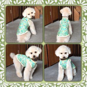愛犬の春用の服を新調しました♡