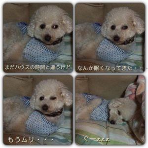 眠すぎて・・・('15・5・12)
