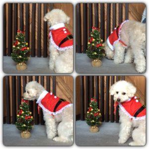 クリスマス用☆(2015・12・17)