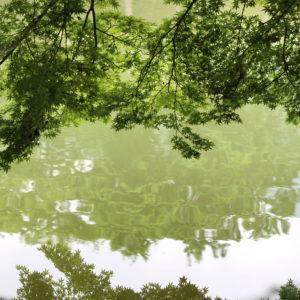 2016・6・17 高鴨神社にて