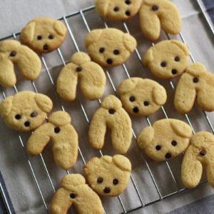 振り返りレオのチョコチップクッキー♡