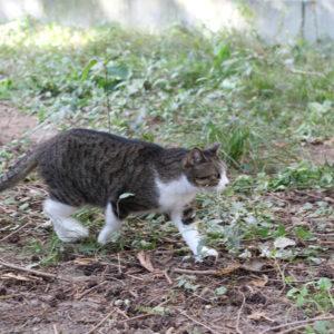 2016・11・18 都会の公園にて 猫ちゃん。