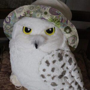 裏面がLIBERTYプリントの生地の帽子。(モデル:ハリーポッターのヘドウィグ(笑)(妹・作)